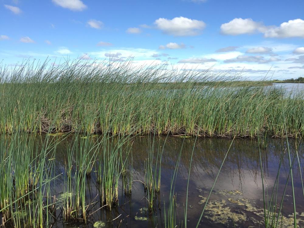 Consumnes River Preserve; near Sacramento, California.
