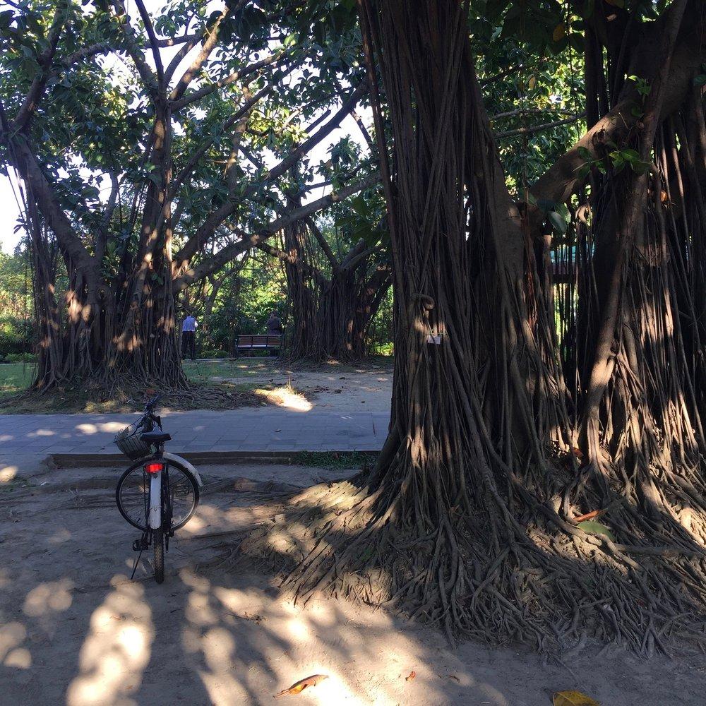 Da'an Park a.k.a. Daan Forest Park is basically Taipei's Golden Gate Park, Central Park, Hyde Park, etc.