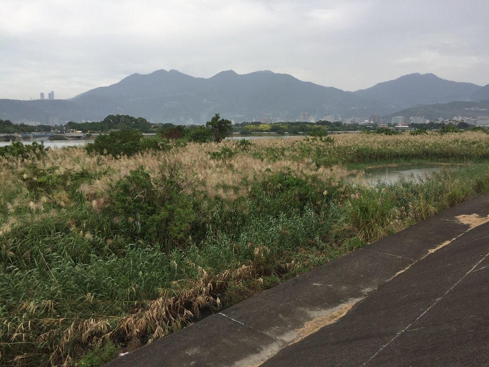 Tamsui f.k.a. Danshui.Apparently the river is polluted with waste from illegal industries and sewage.