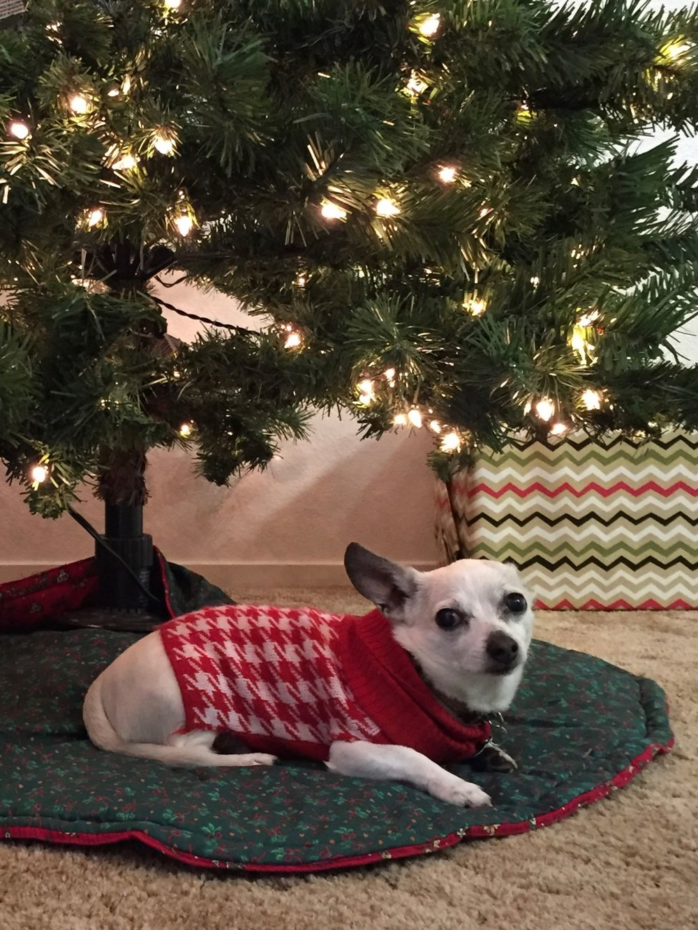 Pete loves being under the tree.