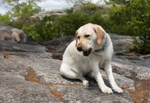 Dog-Hike_0094-300x205.jpg