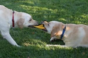 homefront veterinary referrals