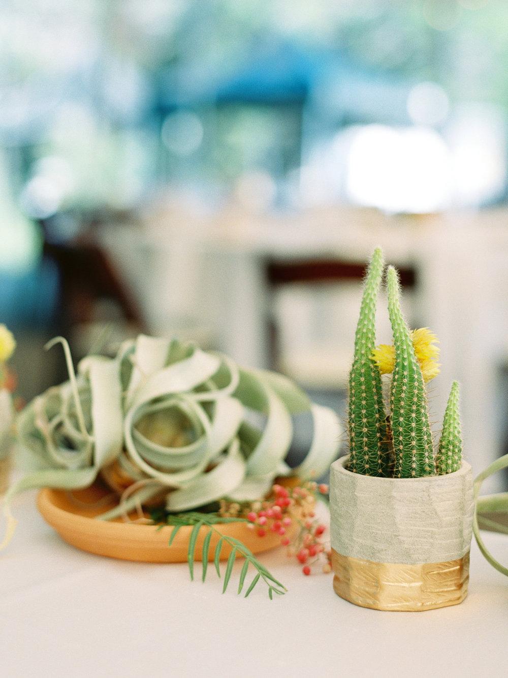 Best-Austin-Denver-California-Wedding-Photographer-Greenhouse-Driftwood7.jpg