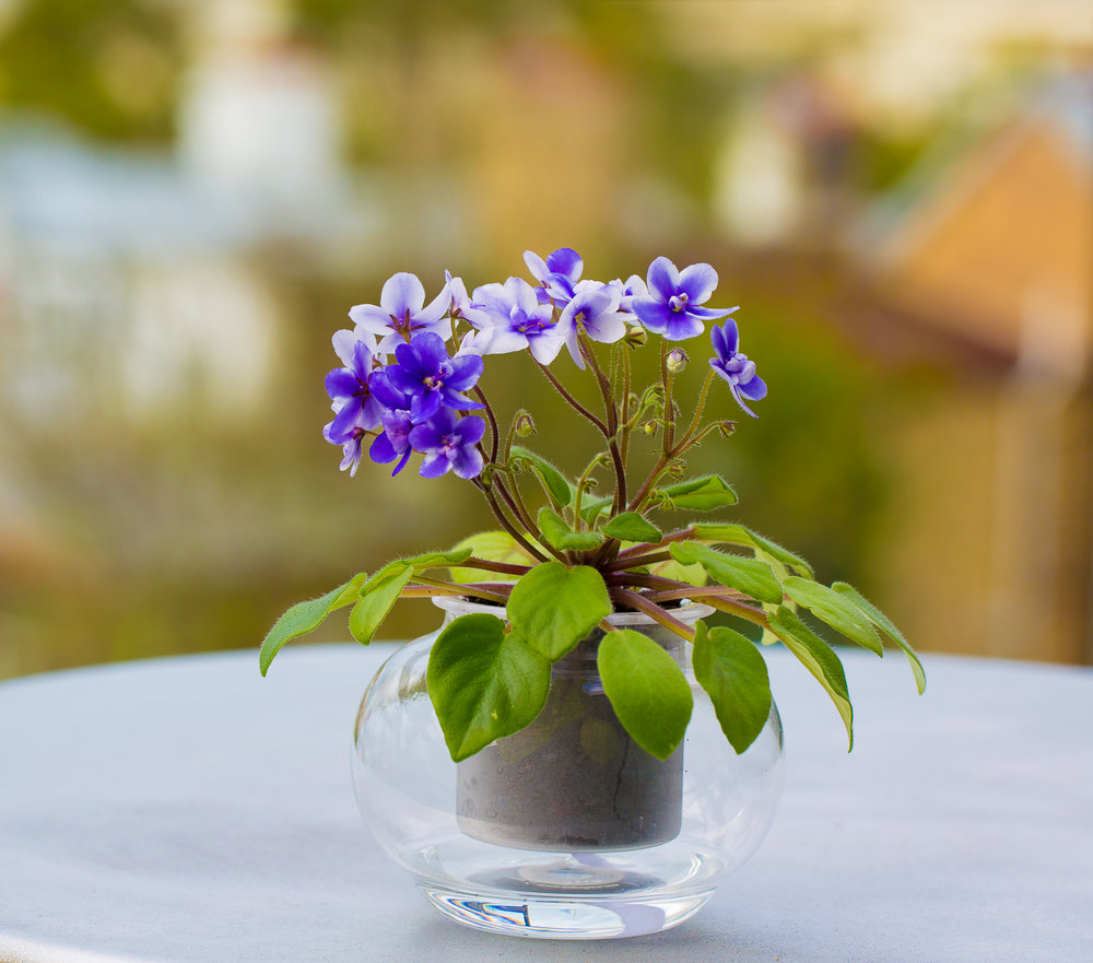 PLANT GALLERY -