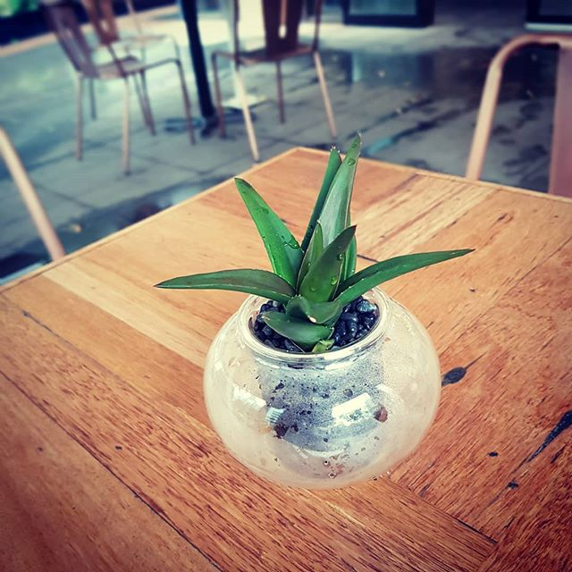 There is a new #coffeeshop that offers escape from insular screens, bringing people together through great #coffee and soothing #plants @salvadorcoffee