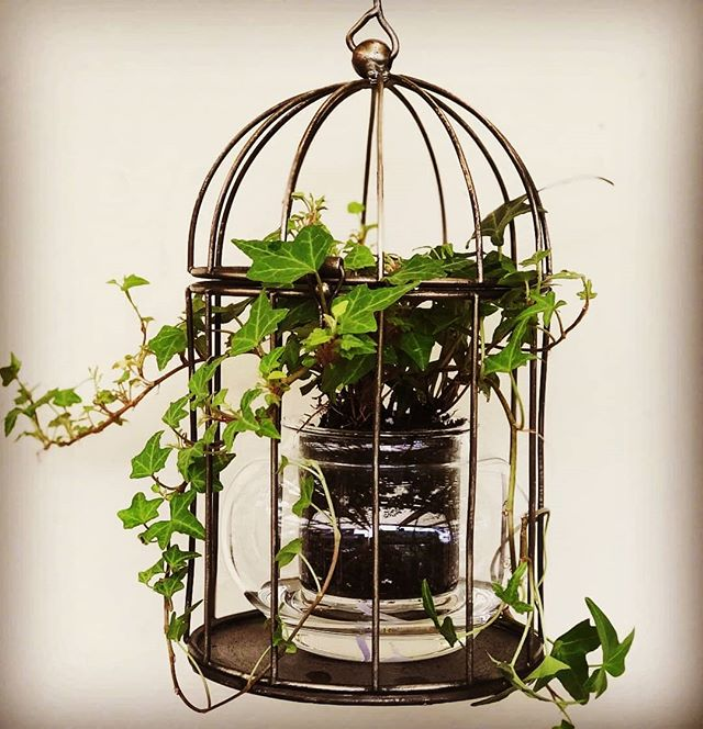 The most delicious Caged Ivy recipe. Thank you for sharing @elegantoutdoorsgardencentre