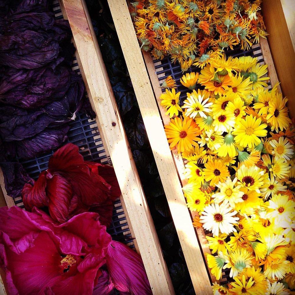 hibiscus & calendula.jpg