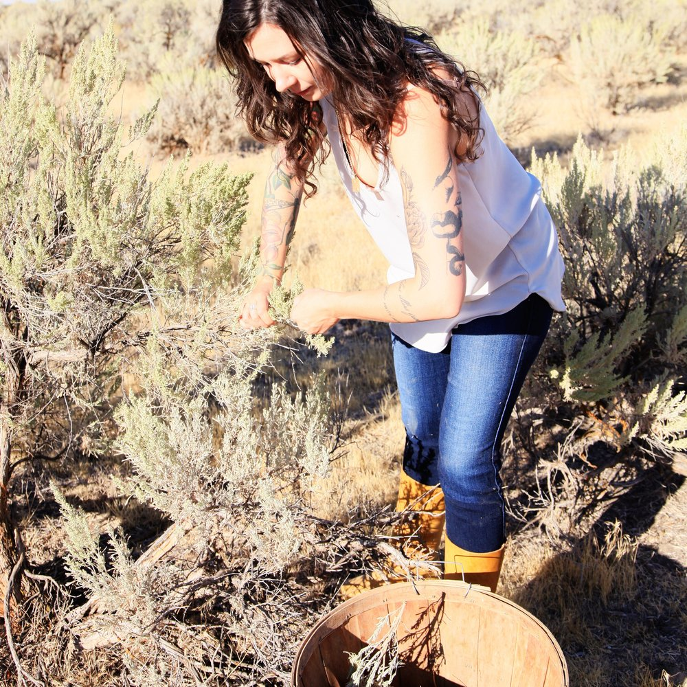 Anthea Skincare sagebrush harvest