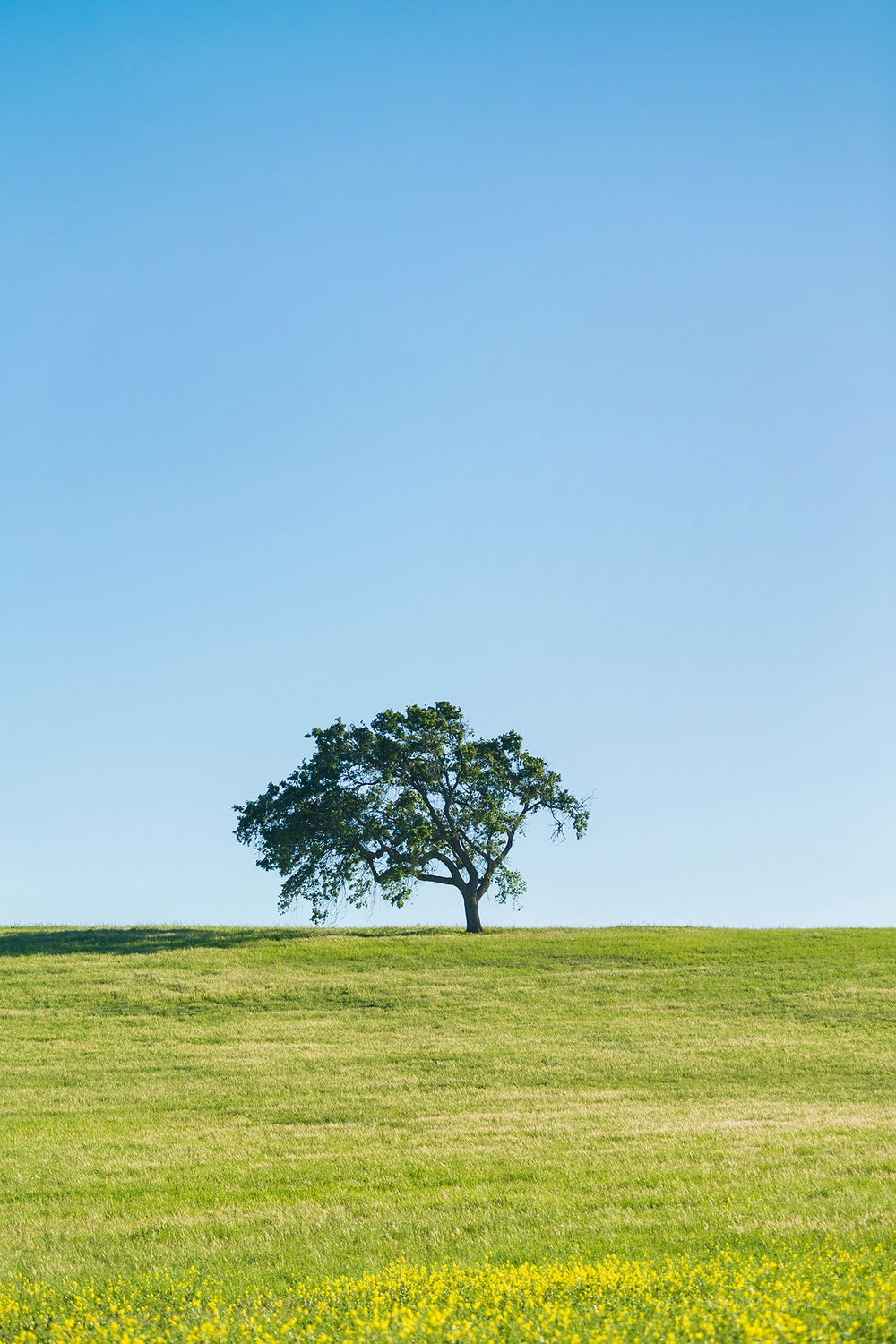 Joshua_Shelly_Photography_letting_go_tree.jpg