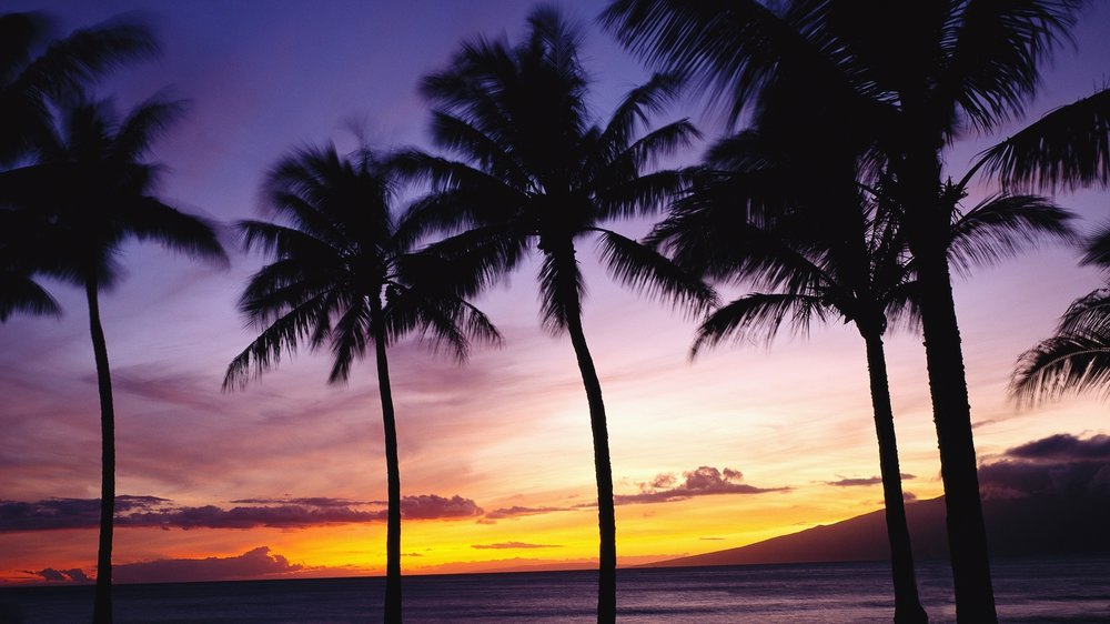 palm-tree-desktop-wallpaper-3.jpg