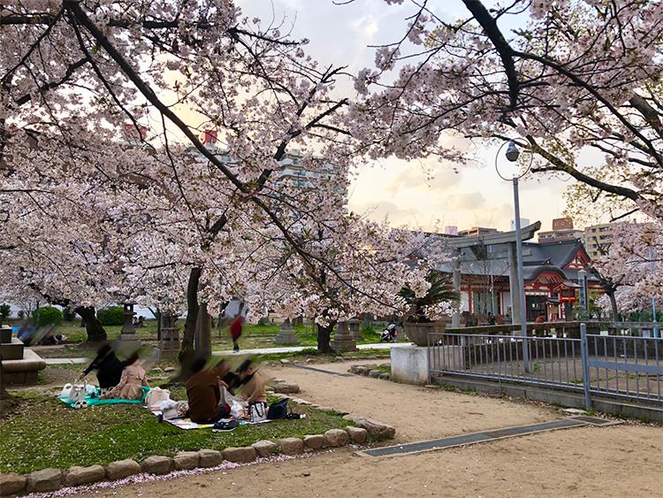 夕焼けと桜。風情を感じます。