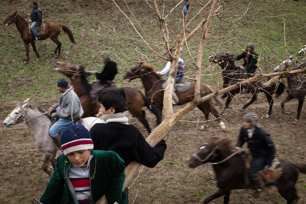Young buzkashi fans hang out in a tree above horses coursing across a field during a Navruz spring match.