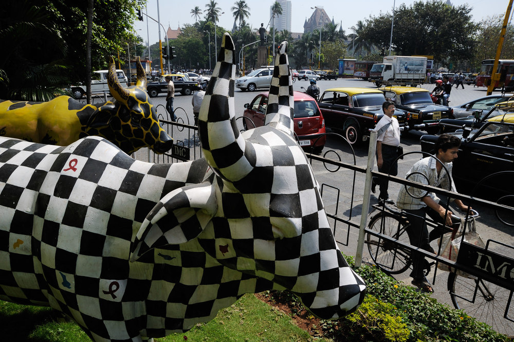 With cities like Mumbai and New Delhi leaving rewards for homeless cows and bulls taken off the streets, the once ubiquitous bovine presence is slowly being relegated to occasional street art and religious parades.