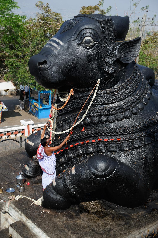 Nandi statue in Chaumundi hills, Mysore, one of the biggest bull statues in India.