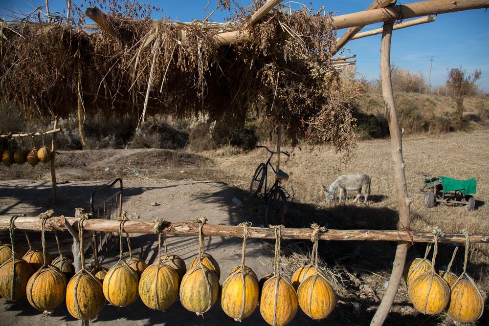 Roadside melon stall near Samarkand, Uzbekistan