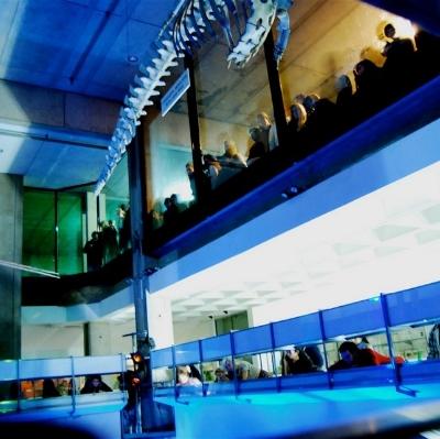 Bonesong  | Whitley & Snape   Carmen Elektra Opera Collective  Musical &Artistic Director