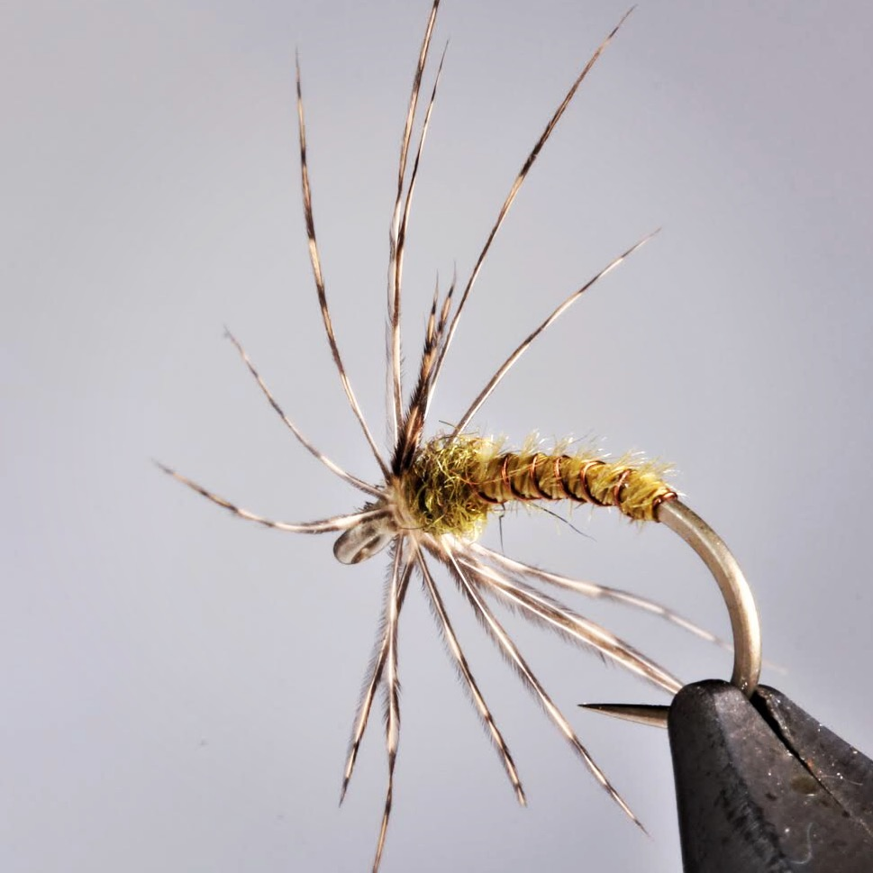 Soft hackle from IG nice.JPG