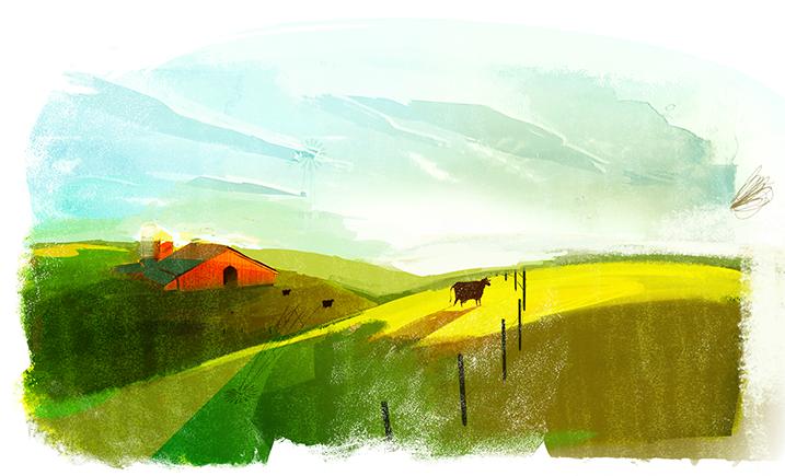 Cows V11