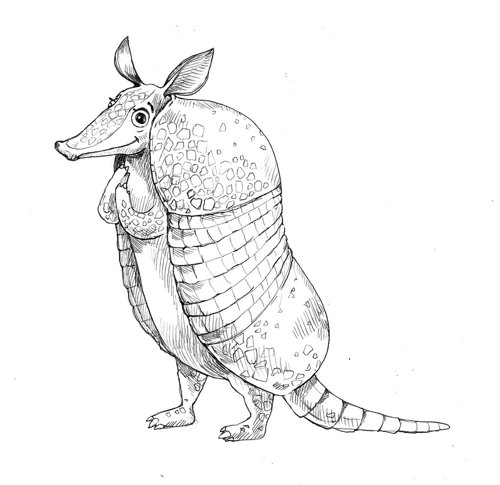 armadillo_housespecial_sketches2.jpg
