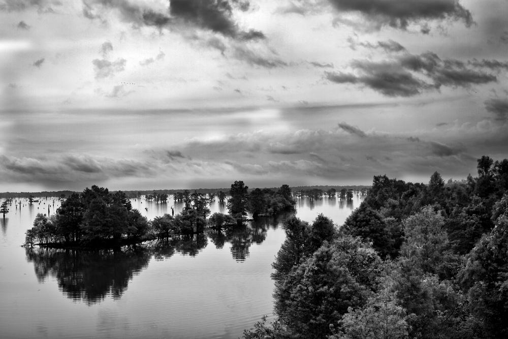 Atchafalaya Swamp.jpg