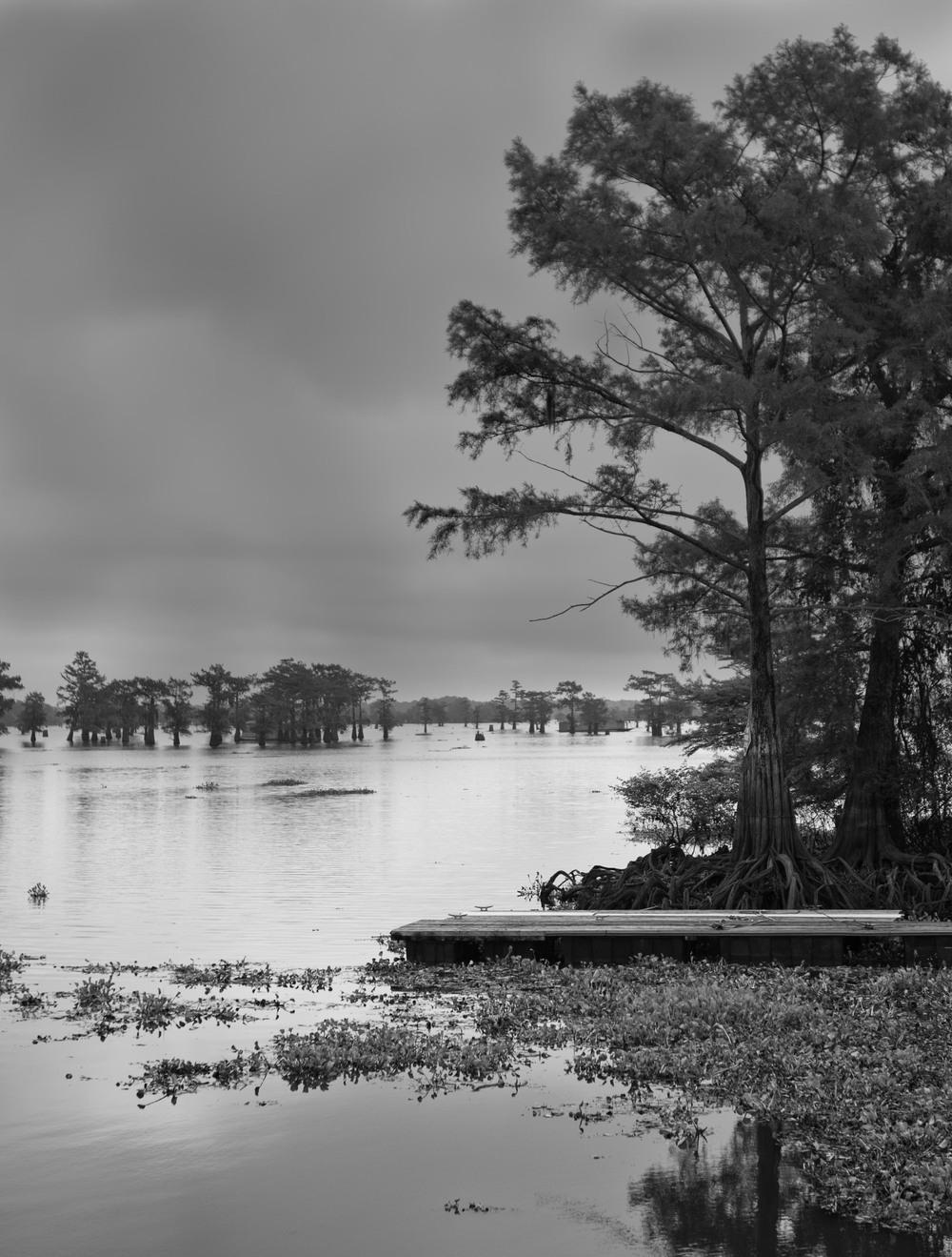 swamp test-2257.jpg