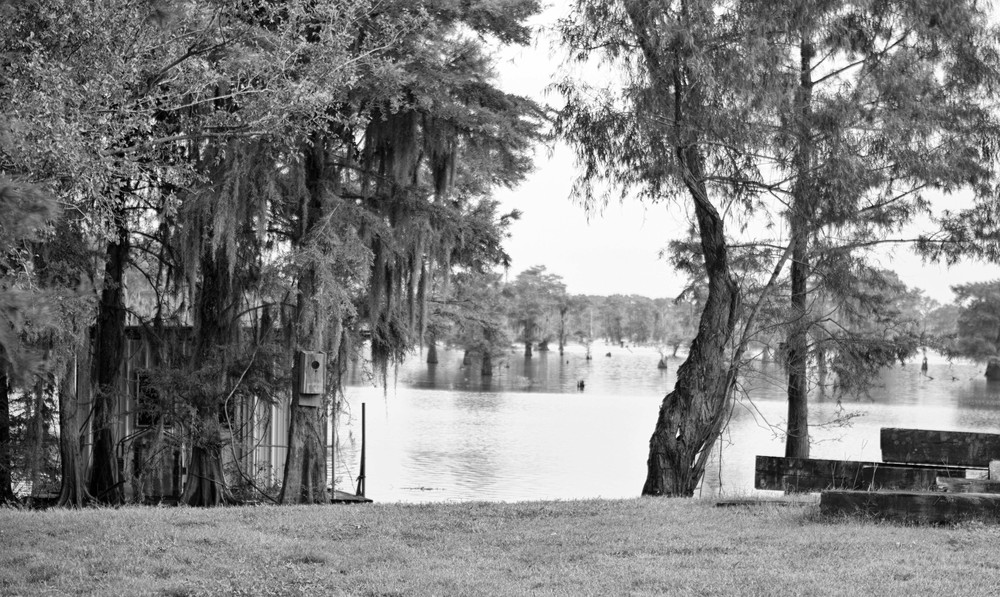 Swamp Test-2270.jpg