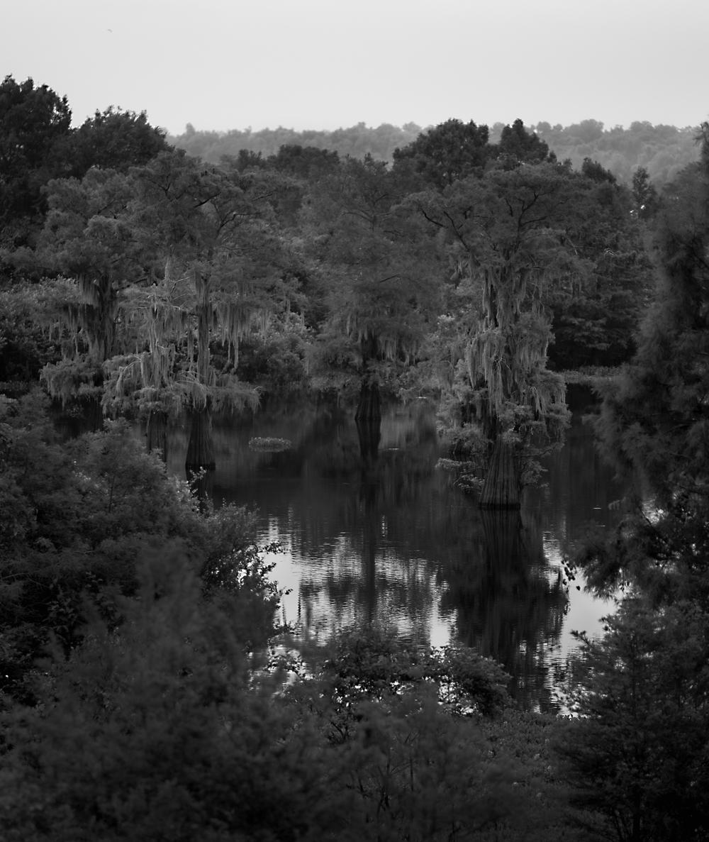 Atchafalaya Basin-2919 2.jpg