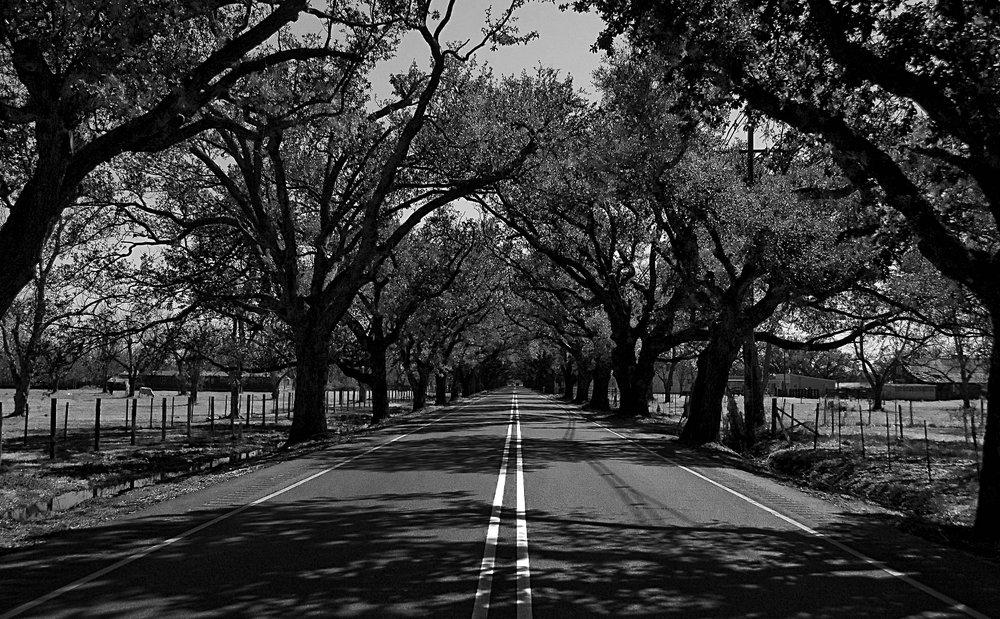 Violet Road-Recovered.jpg