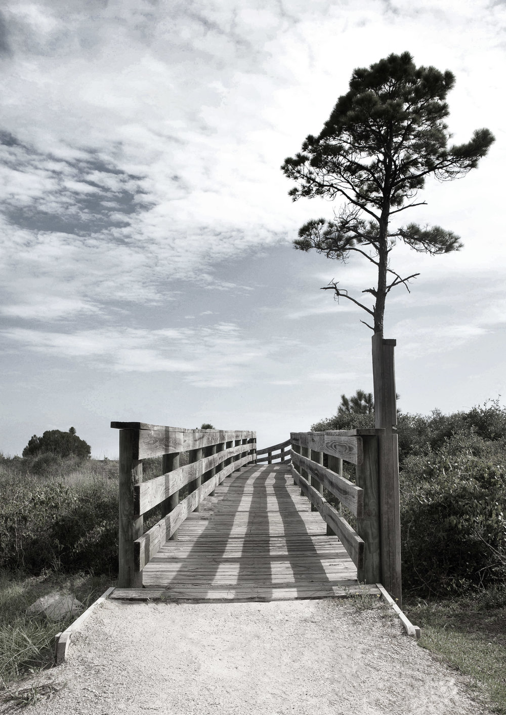 Board Walk 1.jpg
