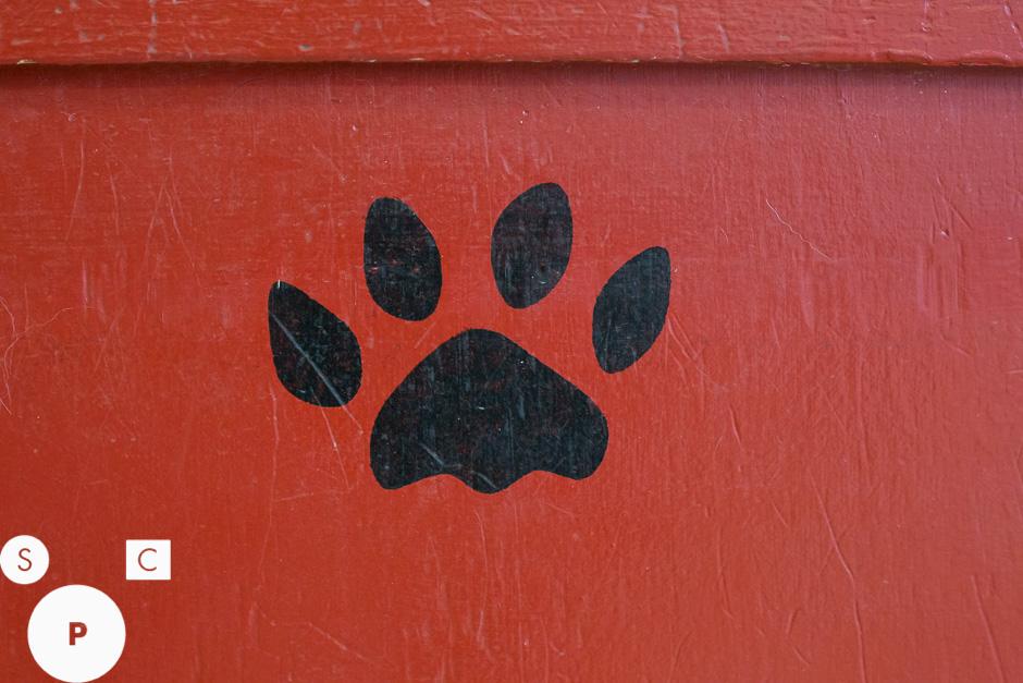 U Dirty Dog Newnan, GA © Susan Crutchfield Photography