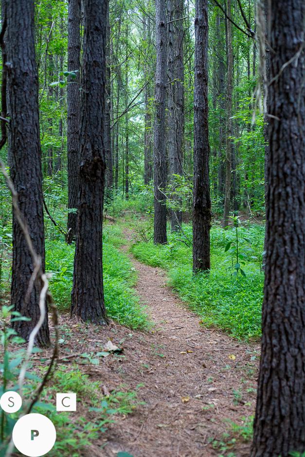 Chattahoochee Bend State Park Newnan, GA © Susan Crutchfield Photography