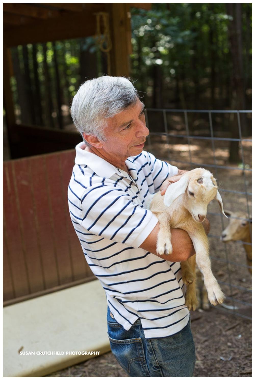 Baby goats farm life