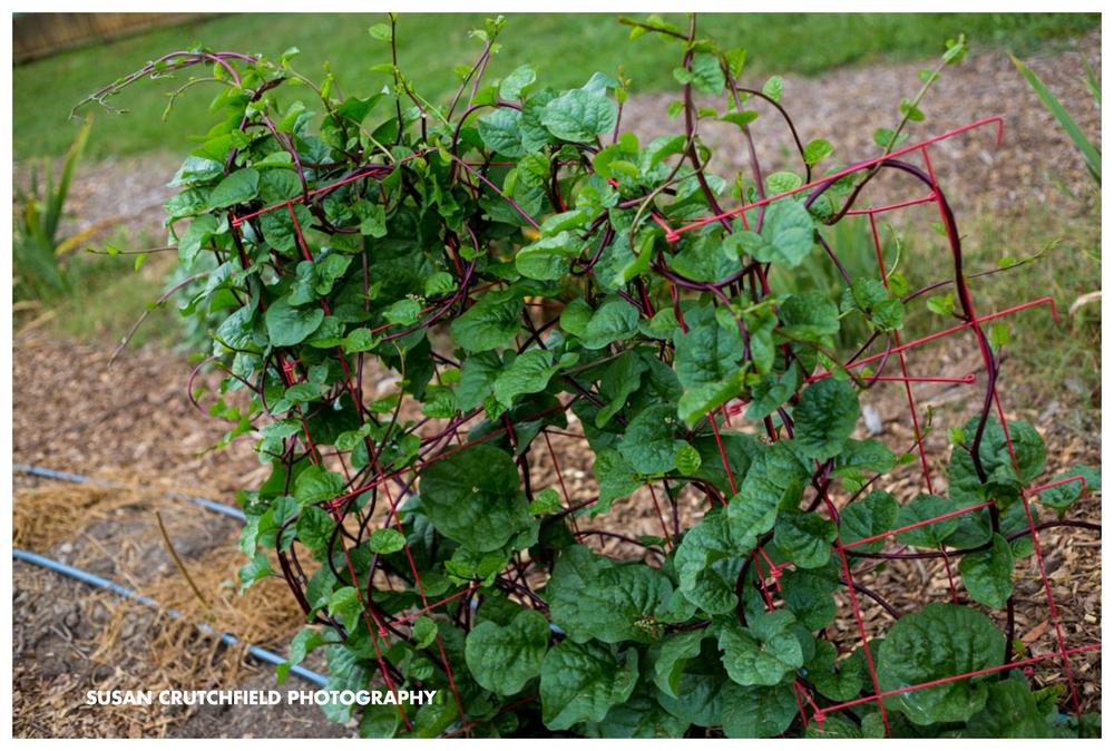 Gardening in Newnan