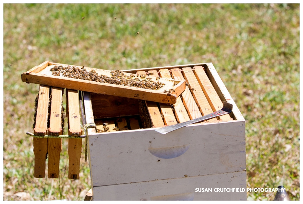 Barrington Farm Apiary, LLC