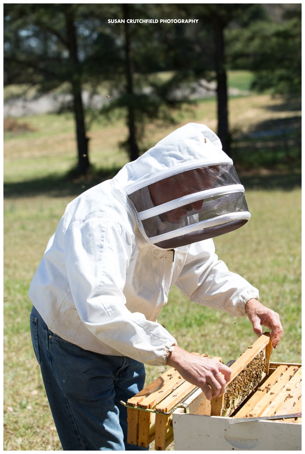 Coweta Beekeeping