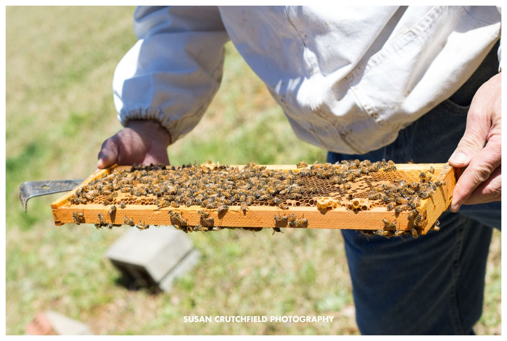 Southern Beekeeping