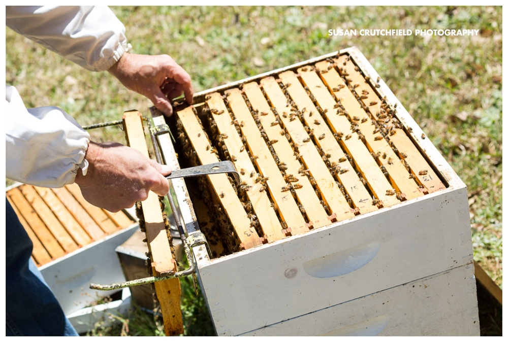 Deep South Beekeeping