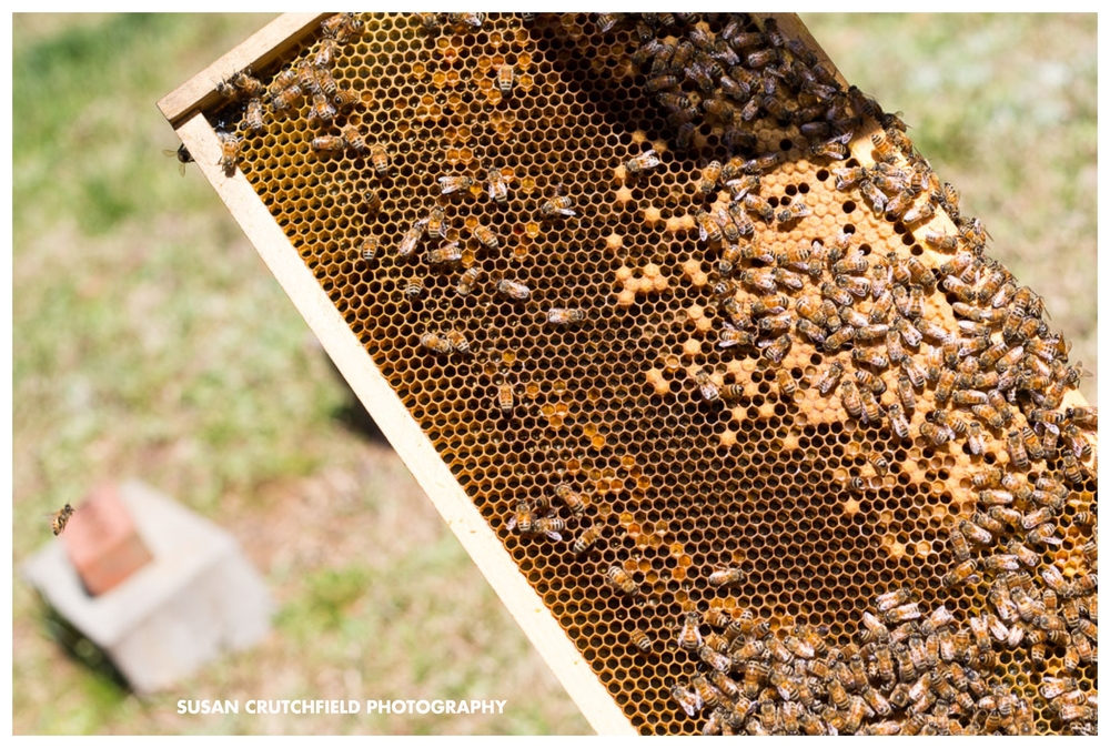 atlanta sustainable beekeeping