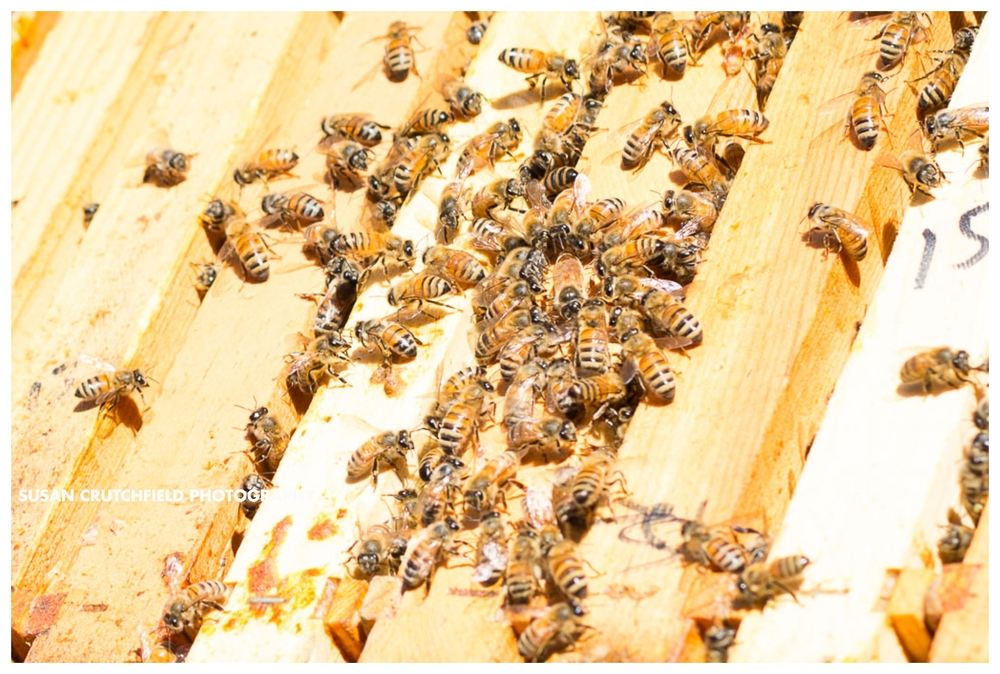 Coweta County Beekeepers