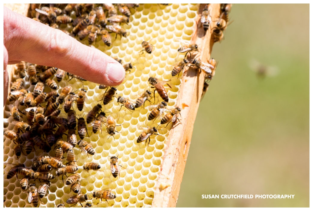Georgia Sustainable Beekeeping
