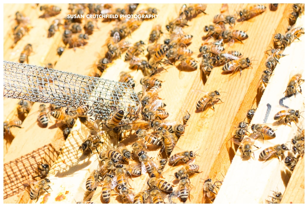 Sustainable Beekeeping newnan, ga