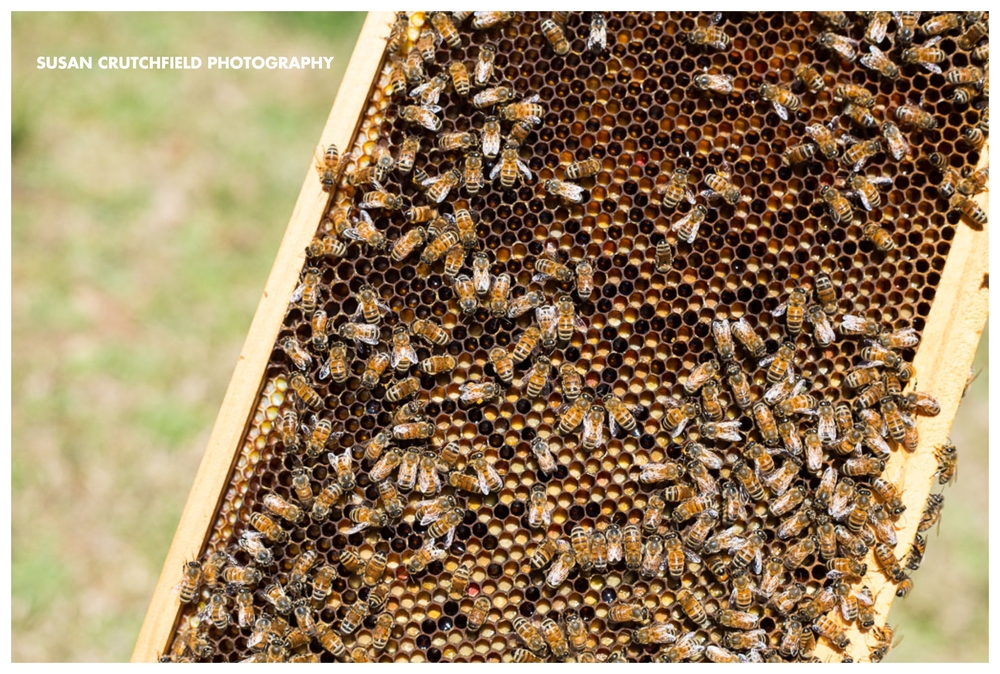 Getting started beekeeping