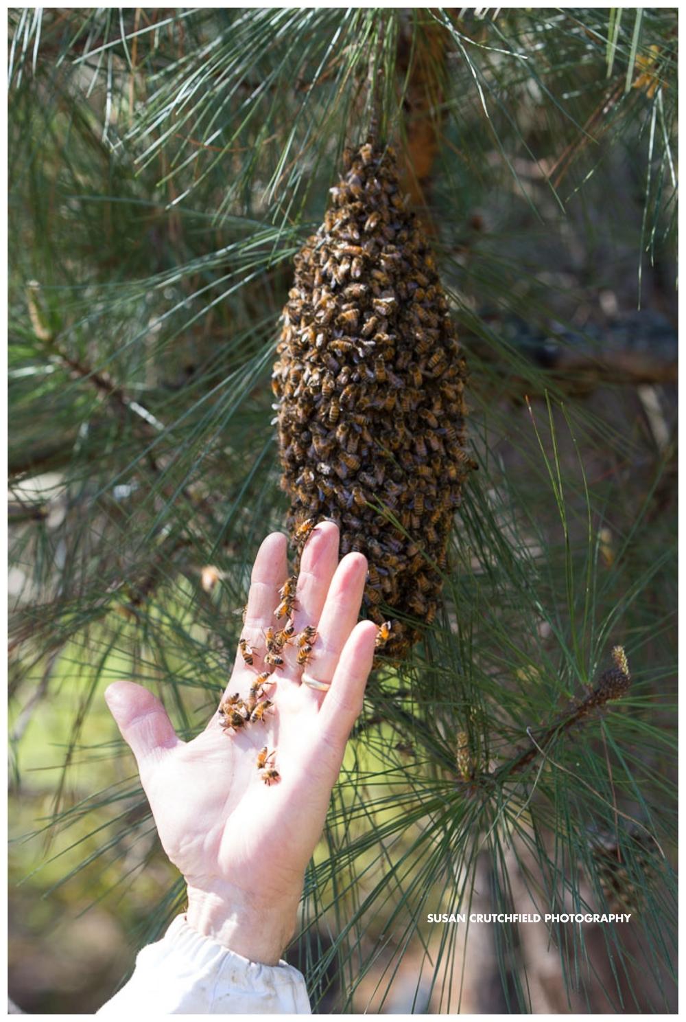Georgia Beekeeping
