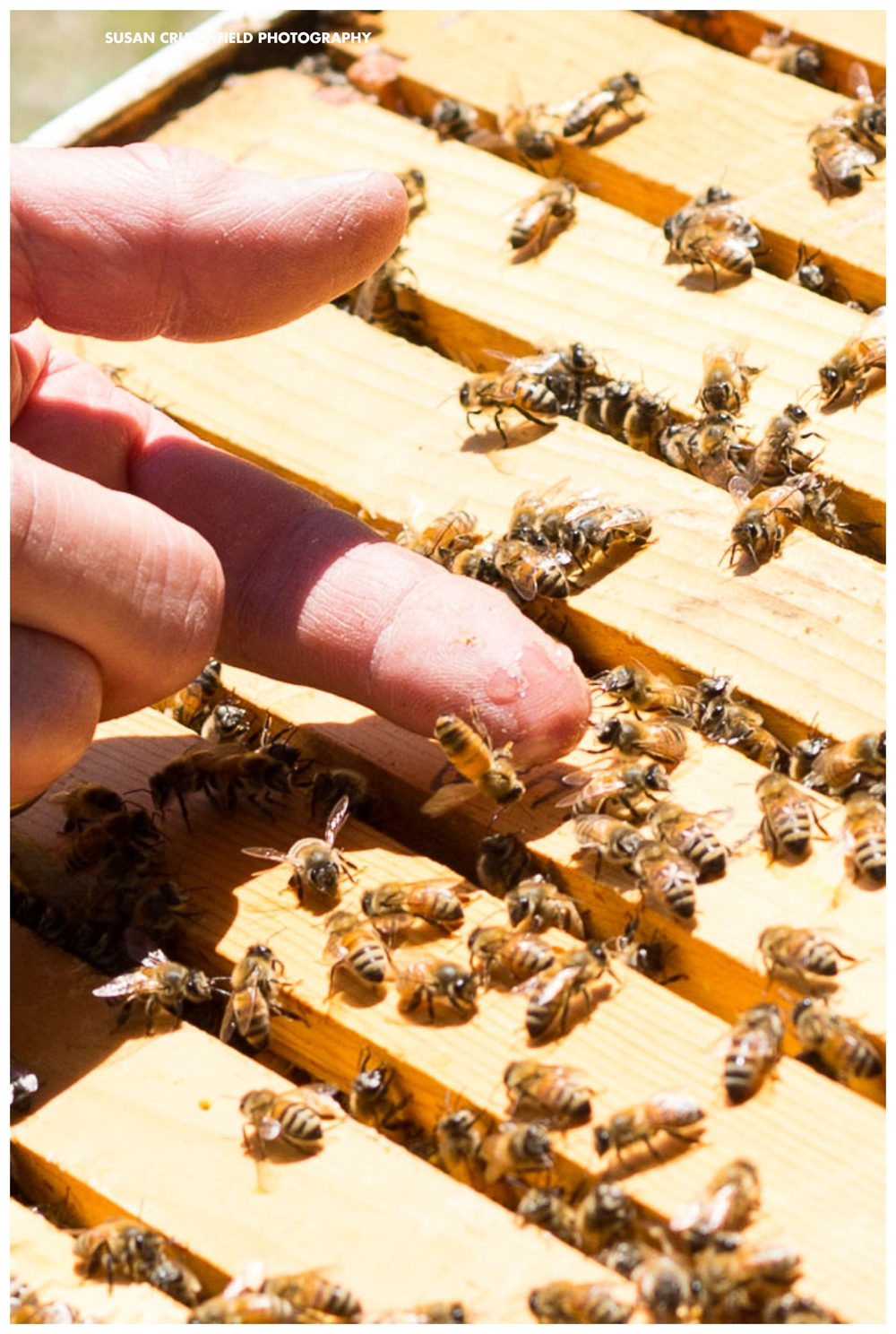 Georgia Beekeepers