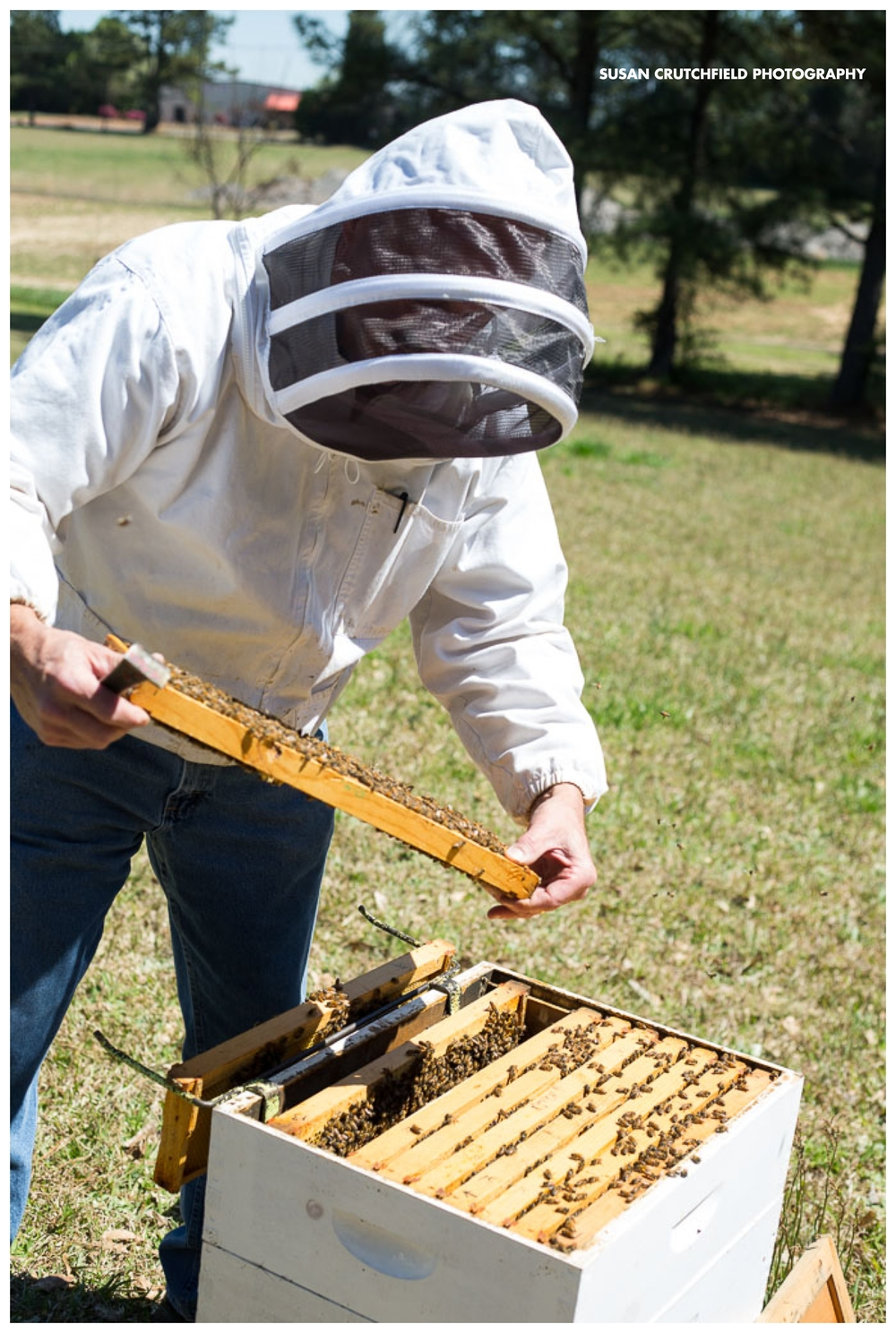 Sustainable Beekeeping in the deep south