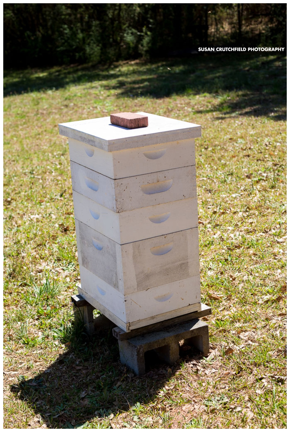 Coweta Sustainable Beekeeping