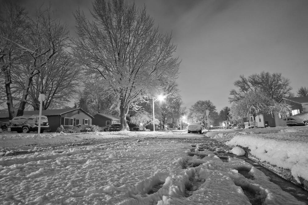 Snowy Mess
