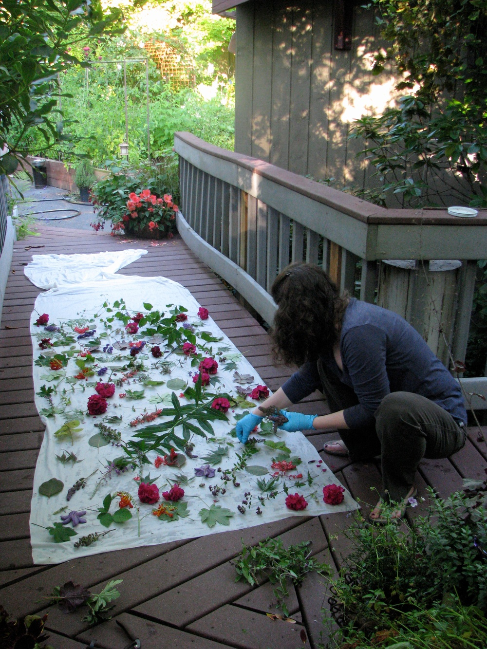 Laying out leaves and flowers to create botanical prints