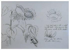 charles-ephraim-burchfield-studies-for-sunflowers.jpg