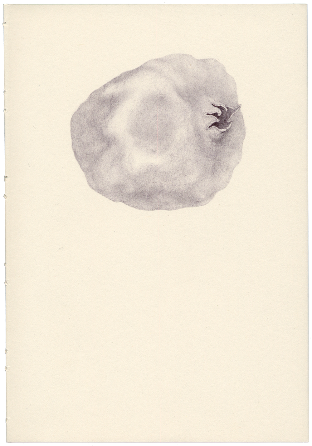 Orata, Untitled [pomegranate]